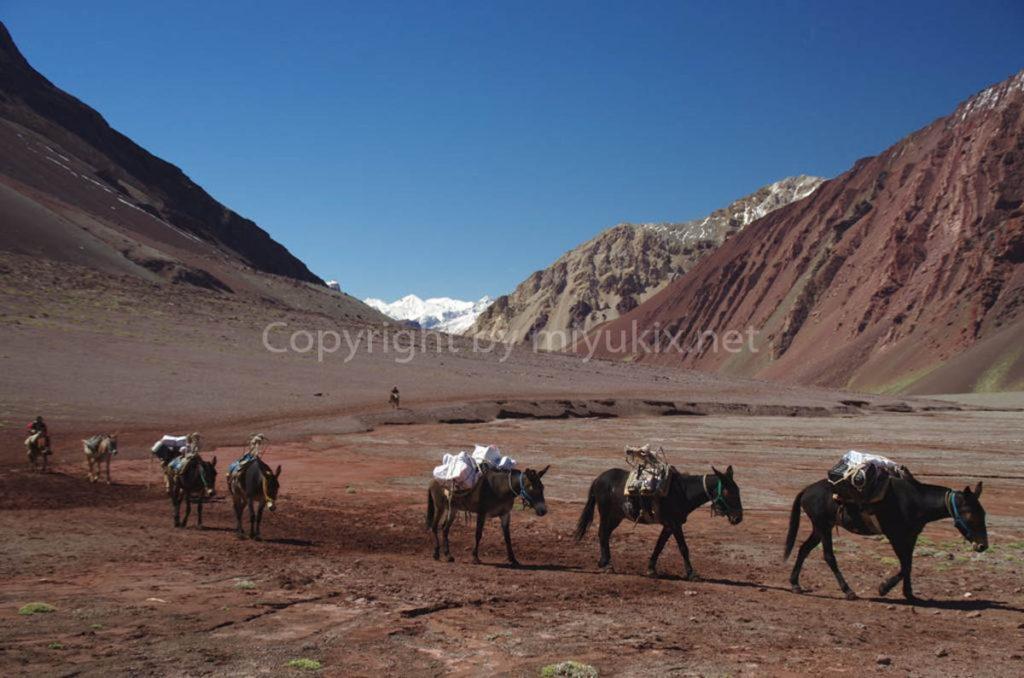 アコンカグア登山3日目 登山者の基地・ベースキャンプへ ムーラとすれ違う Aconcagua BC Plaza de Mulas